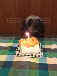 犬の誕生日ケーキの写真・画像素材[1187938]