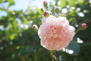 花のアップの写真・画像素材[1448613]