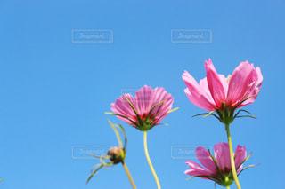 近くの花のアップの写真・画像素材[1448682]