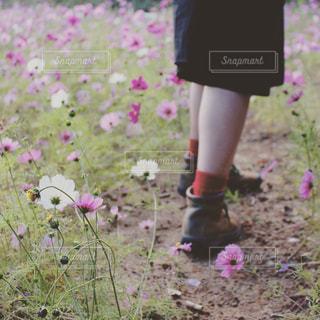 草の中に立っている少女の写真・画像素材[1831360]