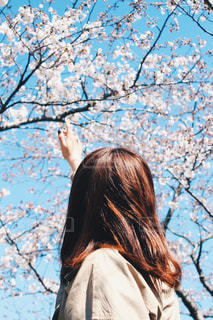 女性,10代,空,花,春,屋外,後ろ姿,女子,女の子,樹木,人物,背中,人,野外,さくら,ブロッサム