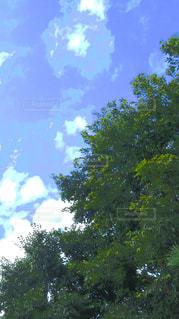 木のクローズアップの写真・画像素材[2424738]