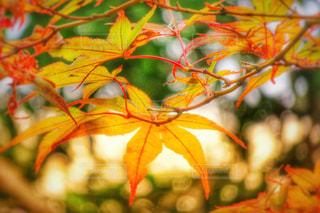 庭の木の写真・画像素材[2511198]