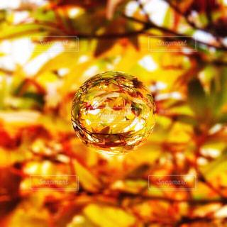 木のクローズアップの写真・画像素材[2511204]