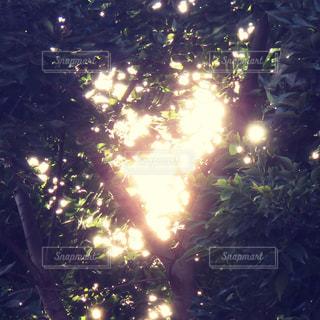 光のハートの写真・画像素材[2624701]