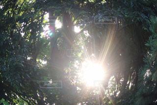 太陽の写真・画像素材[2624907]