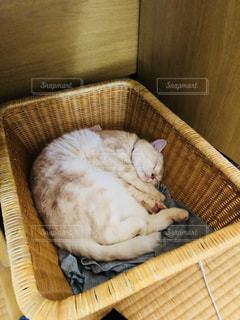 かごの中で眠っている猫の写真・画像素材[2332096]