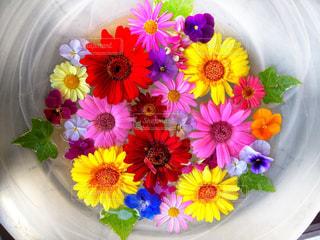 花皿の写真・画像素材[2364059]