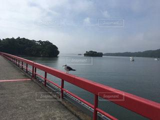 赤い橋とうみねこの写真・画像素材[2333687]