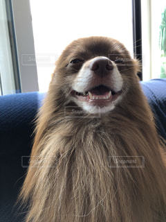 犬のクローズアップの写真・画像素材[2333910]