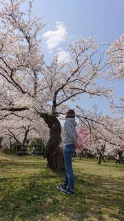 自然,空,公園,花,春,屋外,雲,晴れ,青空,草,樹木,人,ショートヘア,天気,Gパン,桜の花,日中,さくら,パーカー,ブルーム