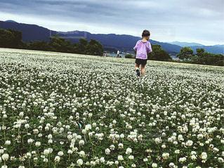 花の前に立つ幼児の写真・画像素材[2435028]