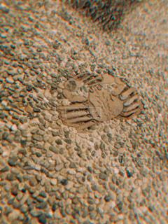 蟹の写真・画像素材[2452458]