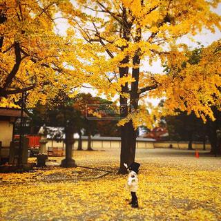 落ち葉の上に立つ子供の写真・画像素材[2548256]