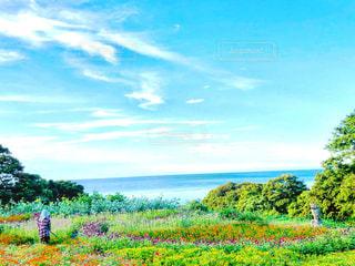海の見える花畑の写真・画像素材[2343882]