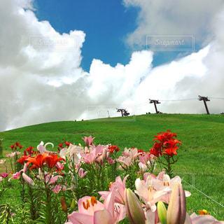 曇りの日にピンクの花のグループの写真・画像素材[2418733]