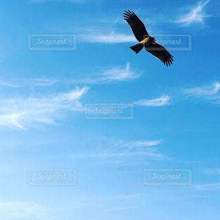 天女のような雲 青空に羽ばたく鳥の写真・画像素材[2472843]