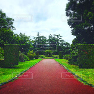 京都市植物園 イングリッシュガーデンの写真・画像素材[3168769]