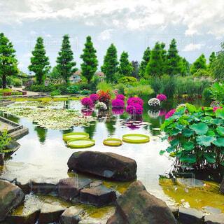 草津水生植物園にての写真・画像素材[4373285]
