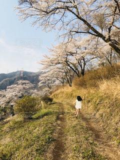 子ども,自然,空,花,春,桜,木,花見,山,お花見,イベント