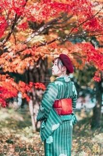 紅葉と着物の写真・画像素材[3911525]
