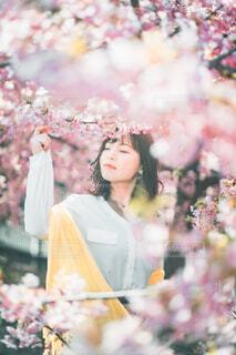 桜花爛漫の写真・画像素材[4332978]