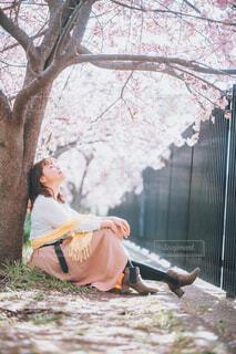 桜花爛漫の写真・画像素材[4332981]