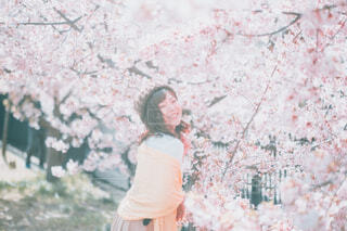 桜花爛漫の写真・画像素材[4332992]