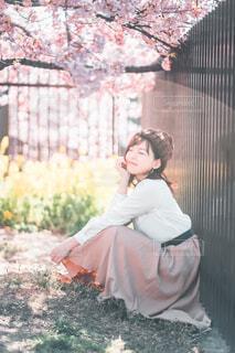 桜花爛漫の写真・画像素材[4332996]