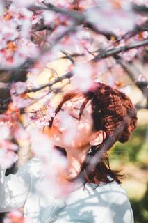 桜花爛漫の写真・画像素材[4332998]