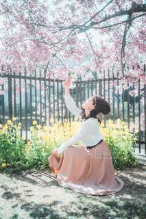 桜花爛漫の写真・画像素材[4332999]