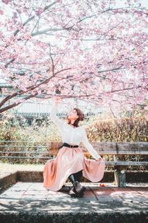 桜花爛漫の写真・画像素材[4333003]