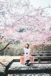 桜花爛漫の写真・画像素材[4333007]