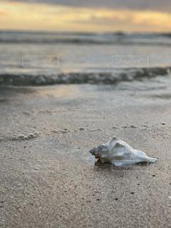 夕暮れの貝の写真・画像素材[2340779]