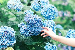 花をクローズアップするの写真・画像素材[2809082]