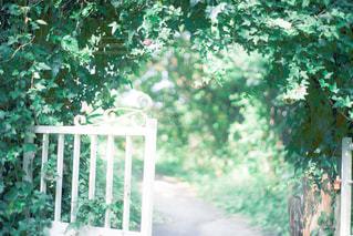 庭のベンチの写真・画像素材[3031804]