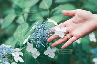 花を持つ手の写真・画像素材[3031815]