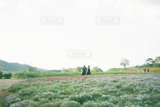 大きな緑の畑の写真・画像素材[3144133]