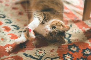 敷物の上に横たわっている猫の写真・画像素材[3375908]
