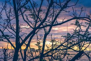 水の体に沈む夕日の写真・画像素材[3397423]