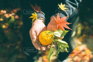 花のクローズアップの写真・画像素材[3799132]