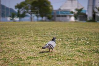 草で覆われた野原の上に立っている鳥の写真・画像素材[4582189]