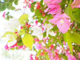 花のクローズアップの写真・画像素材[2345108]