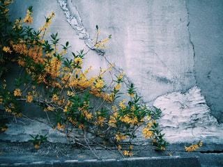 壁の花の写真・画像素材[2433192]