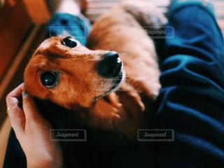 犬,動物,かわいい,茶色,ペット,フィルム,フィルム写真,ミニチュアダックスフント,フィルムフォト
