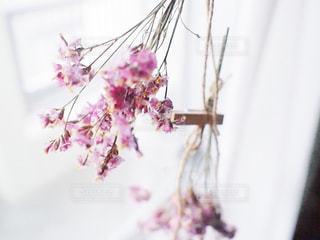 花をクローズアップするの写真・画像素材[2821368]