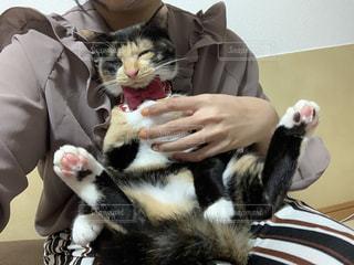 女性,家族,1人,猫,動物,屋内,かわいい,ペット,人物,人,可愛い,三毛猫,キティ,ネコ,猫の日,2月22日