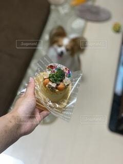 犬,食べ物,ケーキ,屋内,手,手持ち,デザート,人物,人,可愛い,ブロッコリー,人参,誕生日,ポートレート,ライフスタイル,手元,フードケーキ