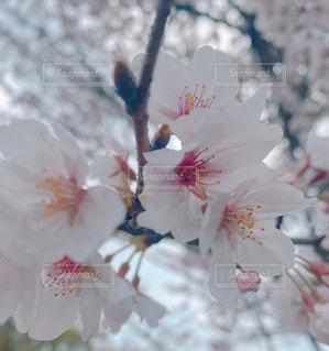花のクローズアップの写真・画像素材[3064595]