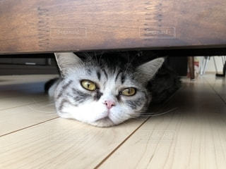 木製のテーブルの上に座っている猫の写真・画像素材[2725377]